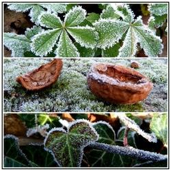 Premières gelées d'automne.