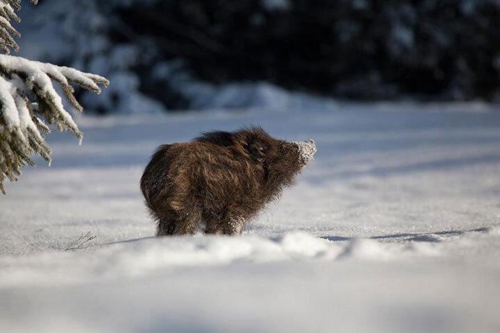 xx-animaux-dont-la-beaute-est-sublimee-par-les-couleurs-hivernales13