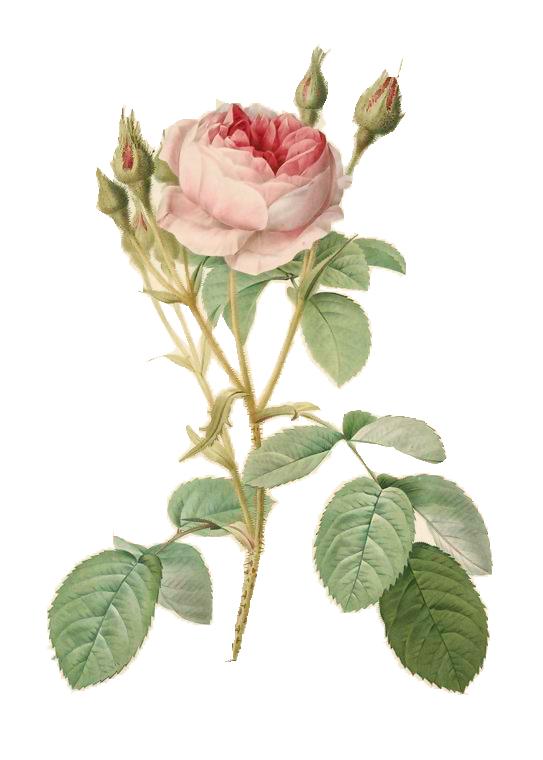 [cerise+] Flowers - Signature complète BV3tbvoCq2MmgVWXQ9I8B7IP3k0