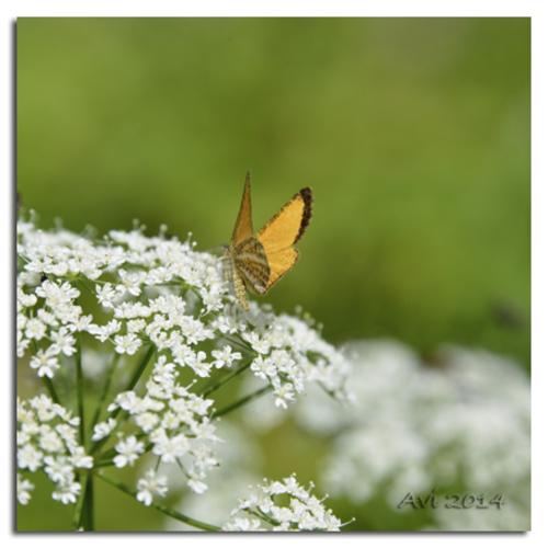 Des petits papillons au bord du chemin