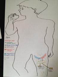 Chapitre 1: les besoins des organes