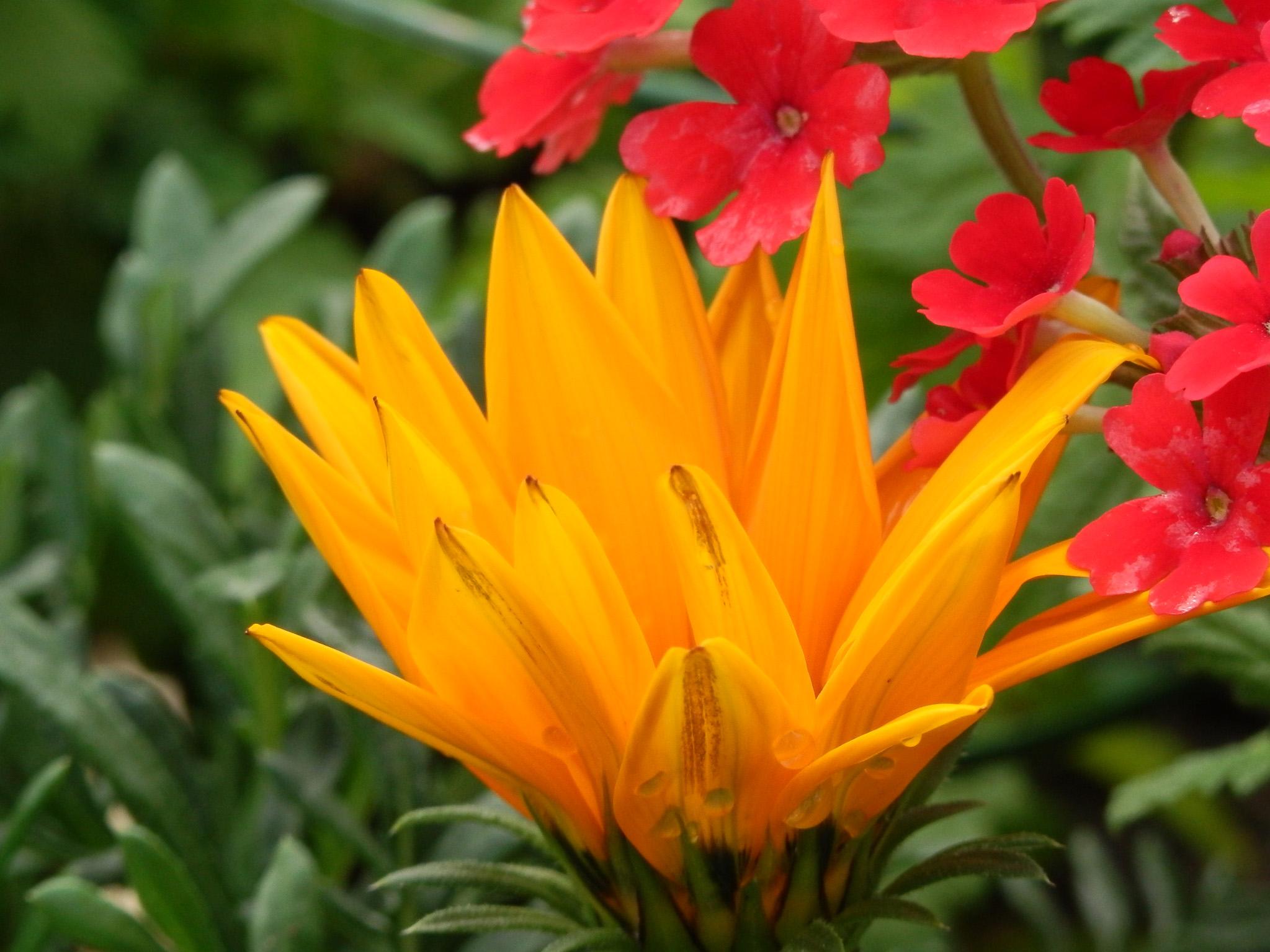 Fleurs d'été diverses