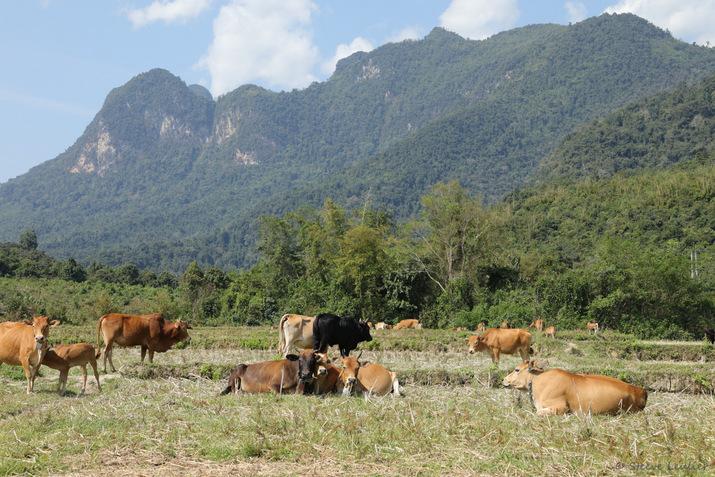 De Sobkhan à Pha Yong, village des ethnies Hmong et Khmou, Laos