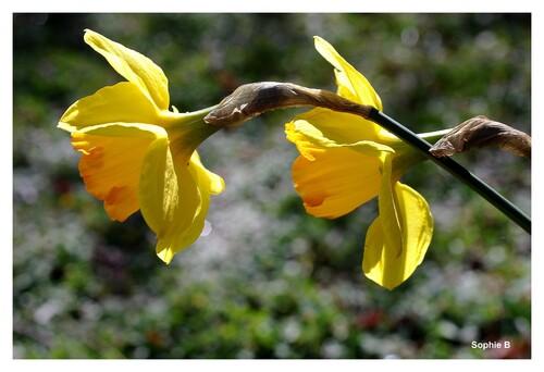 Fleurs de mars-avril