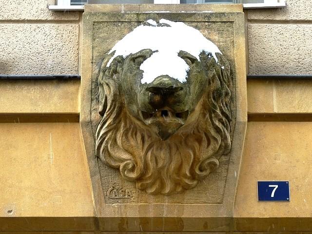 Un lion en hiver 1 Marc de Metz 28 02 2013