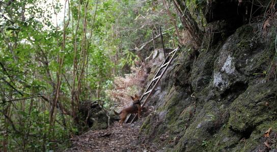 Aurère par le Sentier Augustave (Cirque de Mafate)