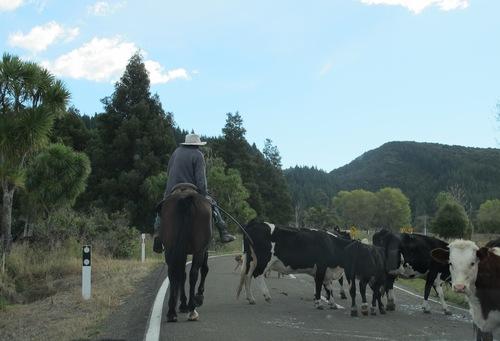 La Nouvelle-Zélande, l'île du Nord