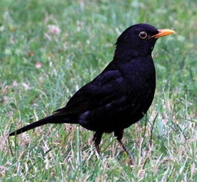 Invitez dans votre jardin, la petite faune  Les oiseaux