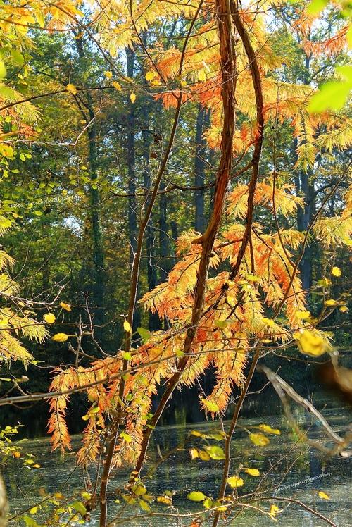 parfum d'automne (2)