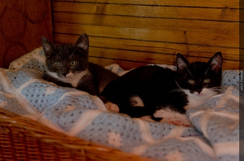Refuge des chats de Lagoubran