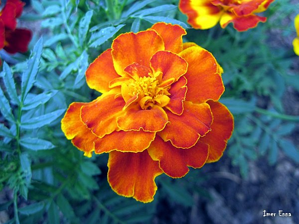 Fleurs-4183.JPG