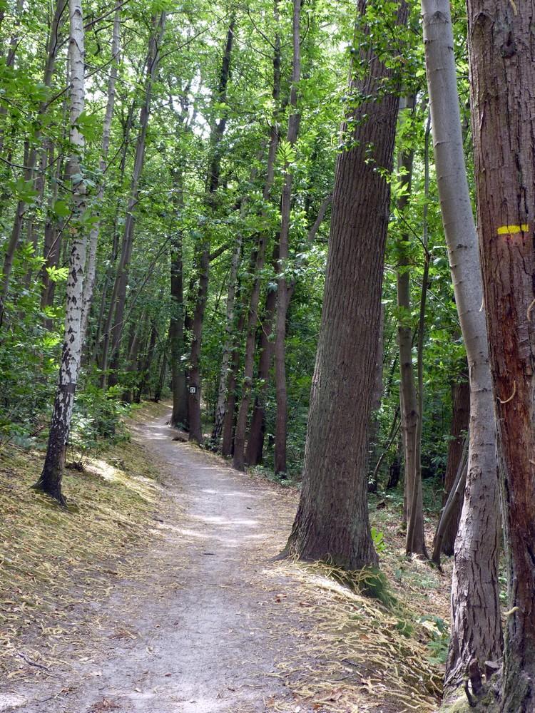 Forêt de la Malmaison