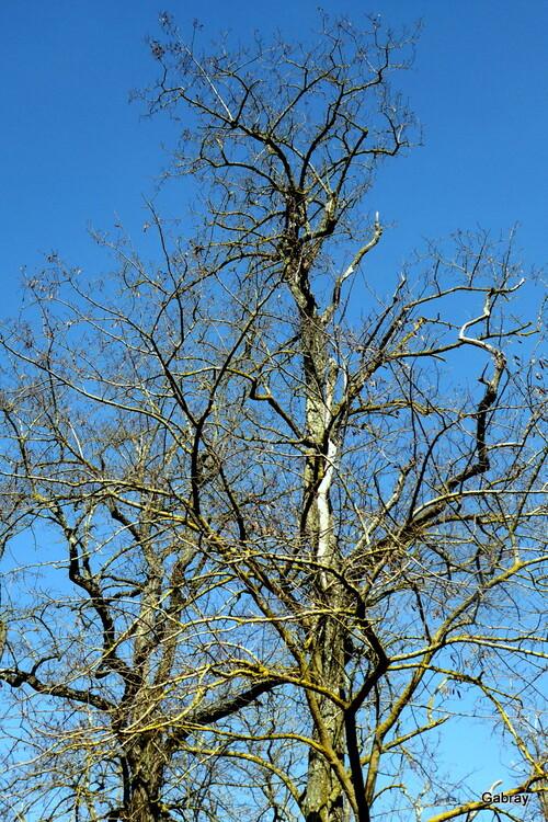 Les branches nues en couleur!