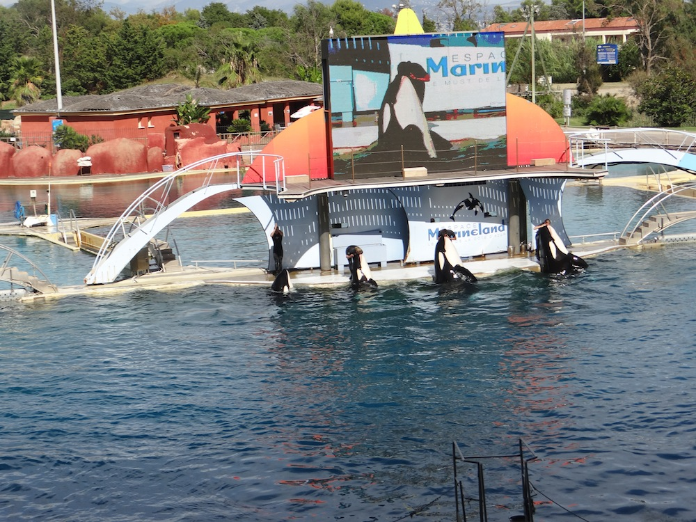 le bassin des orques...féerique ..que l on regarde avec des yeux d enfants