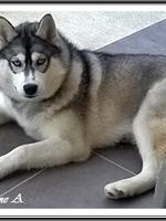 Louska (5,5 mois)