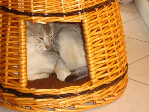 La tour à chats :