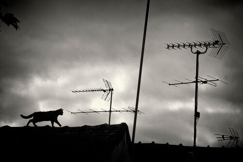 08 - Encore des chats sur les toits