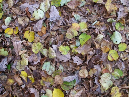 tapis de feuilles mortes : un compost naturel en formation !