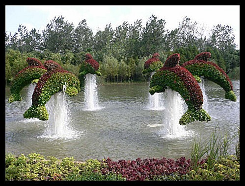 dolphins-topiaries.jpg