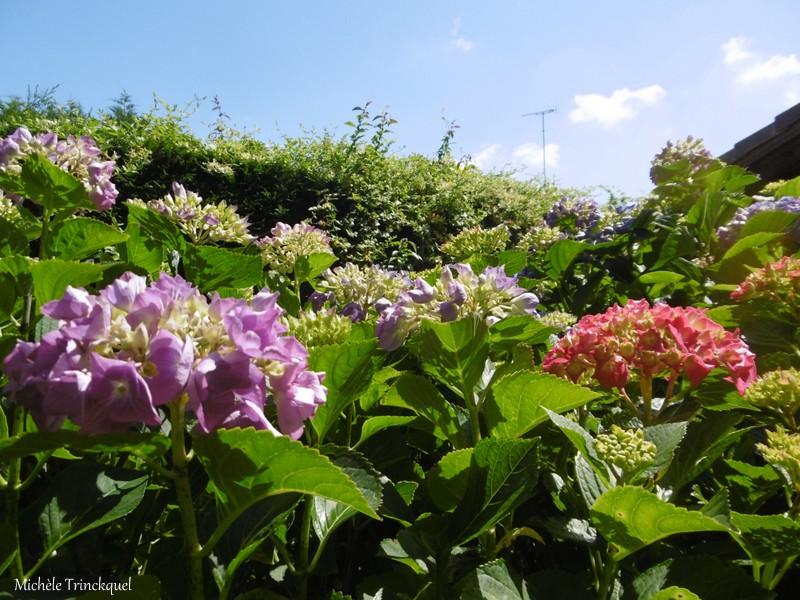 Une balade... dans le jardin fleuri d'une copine (suite)...