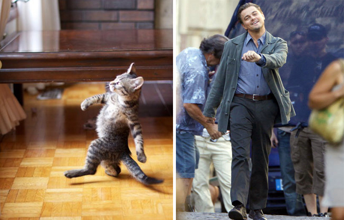 cat-looks-like-other-thing-lookalikes-celebrities-2__700