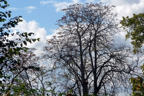 Des branches en automne