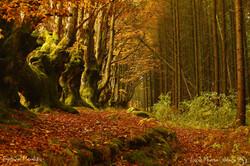 L'Allée des Géants ou Le chemin des sorcièresForêt Bourbonnaise