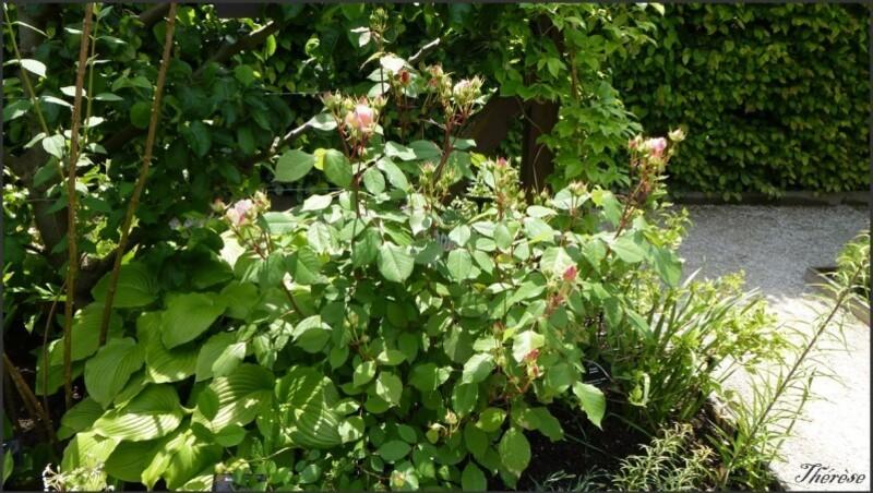 Jardin de l'odorat (2)