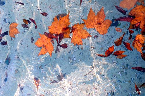 Automne : feuilles dans l'eau !