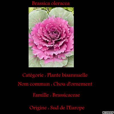Blog de lisezmoi :Hello! Bienvenue sur mon blog!, Des fleurs et des arbres
