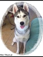 Louna (10 mois)