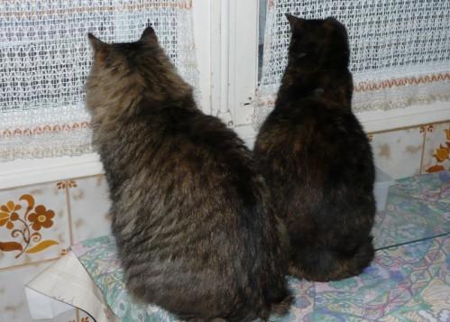 chats-a-la-fenetre-03.JPG