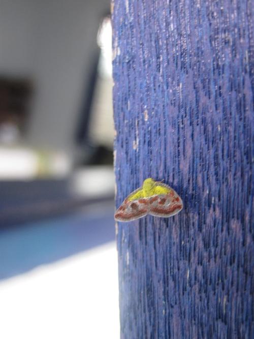 Papillons de Bali 6