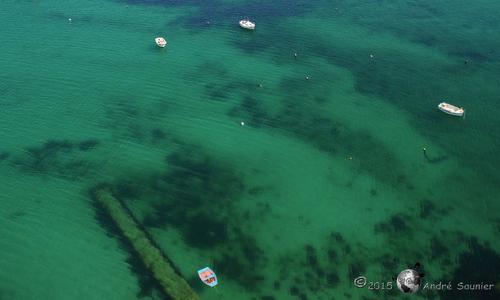 Plonger dans le grand... vert !