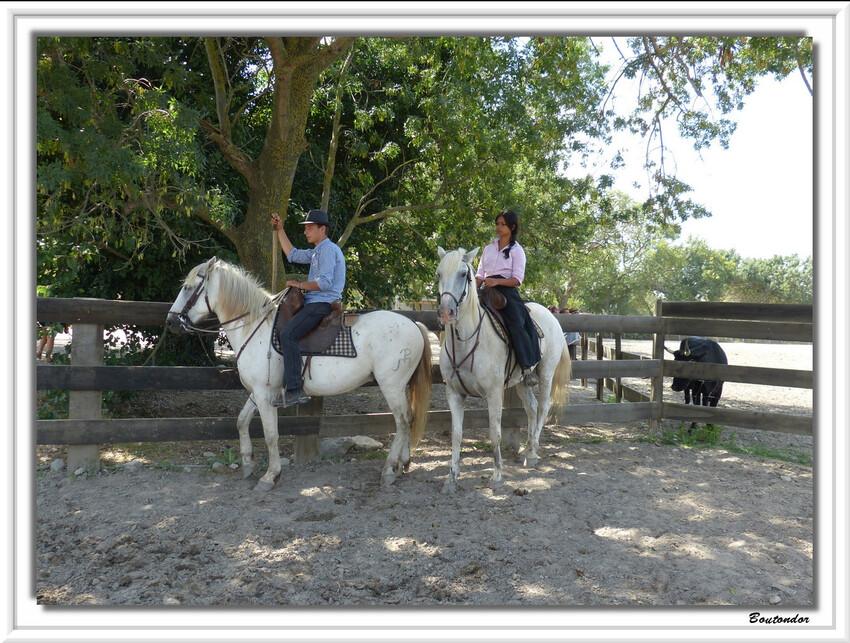 visite d' une manade a Aigues-Mortes