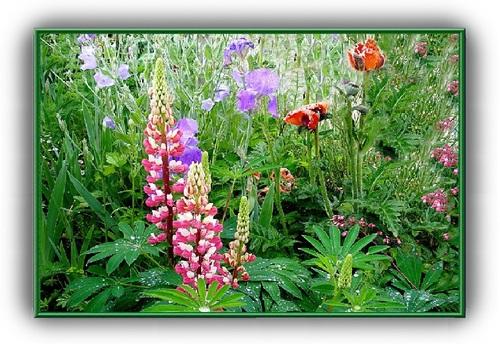 Beau jardin fleuri