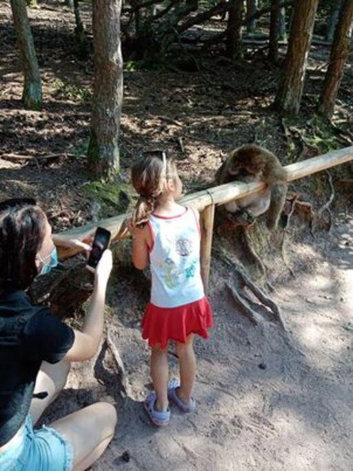Balade à la montagne des singes