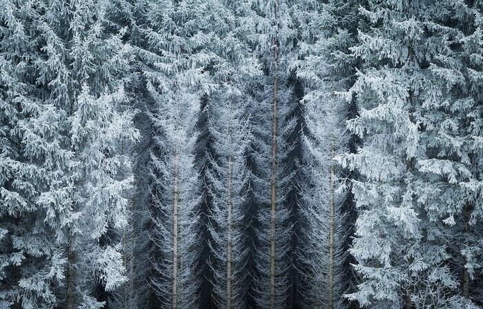 La magie de l'hiver dans la vraie vie: de belles photos de forêts enneigées