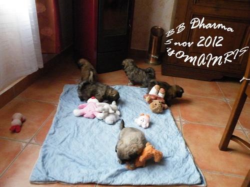 Photos de Hounah et de toute la petite famille...