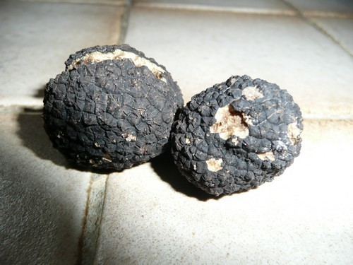 truffes-bourgognes-2.jpg