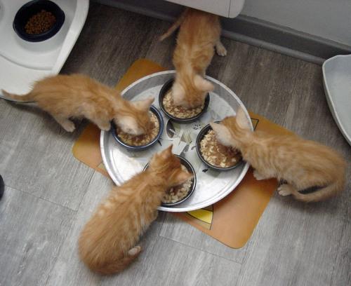 Un solide appétit !