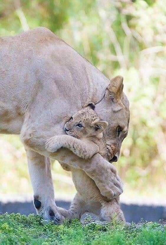 Rien n'effacera jamais l'amour d'une mère