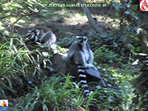 ZOO DES SABLES D'OLONNE  2/9   17/03/2014