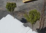 les deux premiers arbres