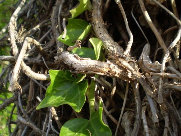 végétal2