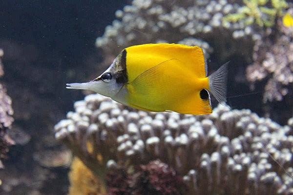 aquarium La Rochelle(2)