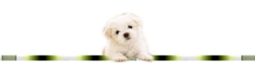♥ Lassie ♥
