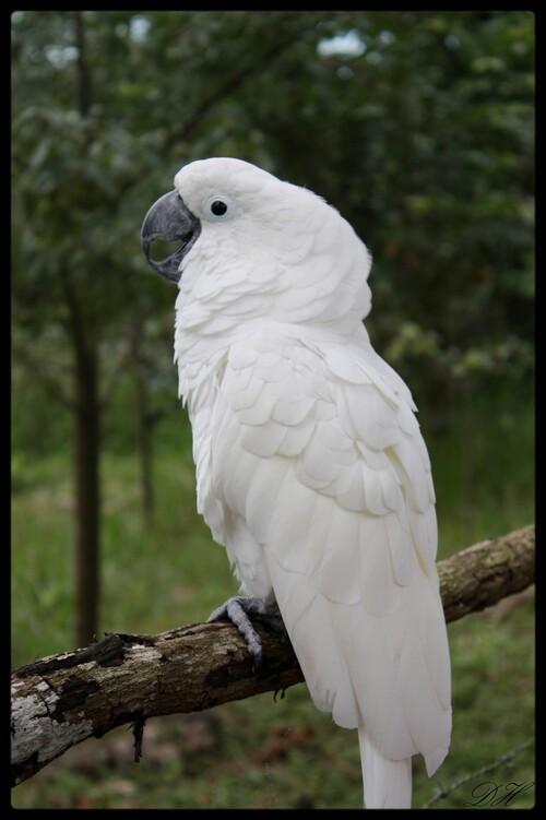 A plumes, à poils ou à écailles
