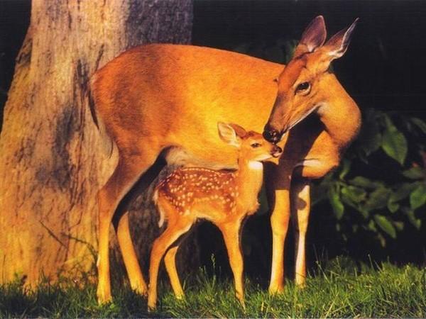 TENDRESSE ANIMALE RIEN N'EST PLUS JOLI !!!