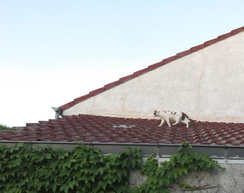 Une chatte sur un toit